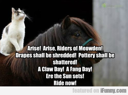 Arise! Arise, Riders Of Meowden! Drapes Shall Be..