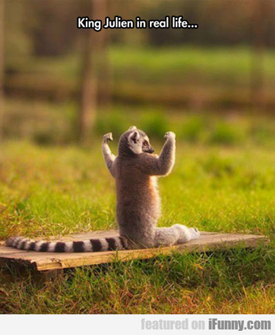 King Julien In Real Life...