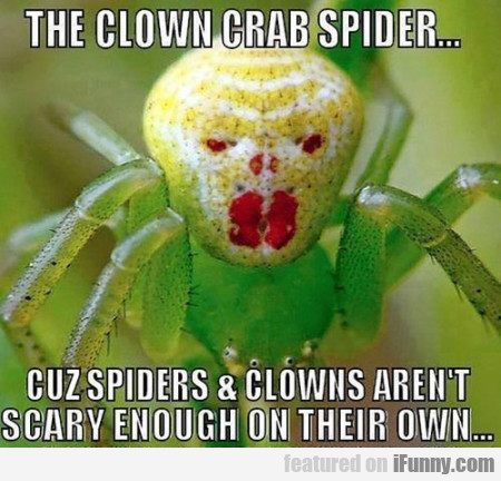 the clown crab spider
