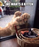 We Wants A Kitten