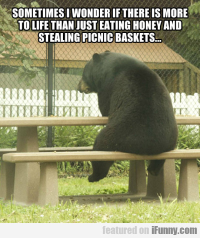Sometimes I wonder if there is more to life than..