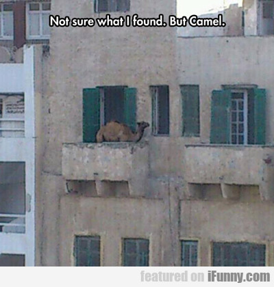Not Sure What I Found, But Camel...