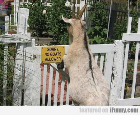 Sorry, No Goats Allowed