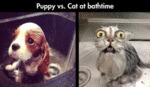 Puppy Vs. Cat At Bathtime