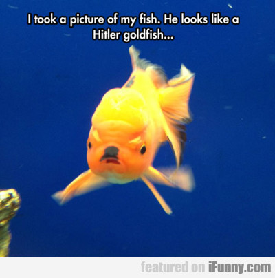 I Took A Picture Of My Fish. He Looks Like A...