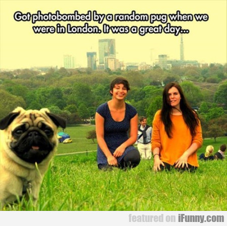 Got Photobombed By A Random Pug When We Were..