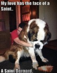 My Love Has The Face Of A Saint.. A Saint Bernard