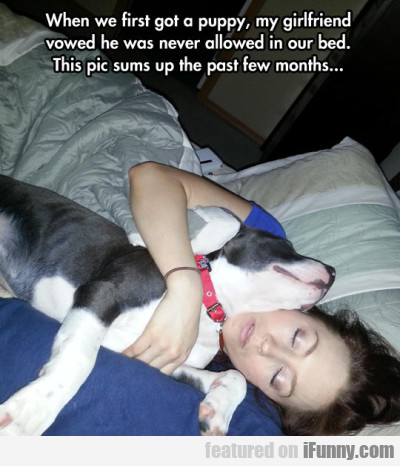 When We First Got A Puppy, My Girlfriend Vowed..