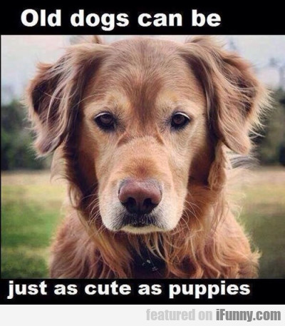 Old dogs can be just as cute as puppies