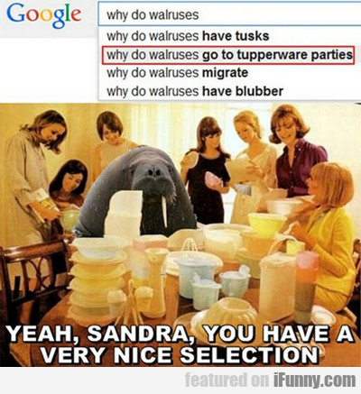 Why Do Walruses Go To Tupperware Parties...