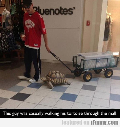 This Guy Was Casually Walking His Tortoise...