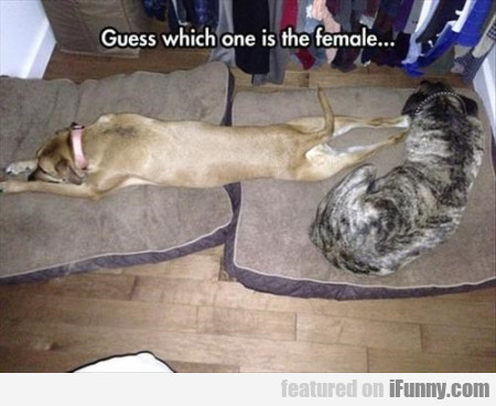 Guess Which One Is The Female...