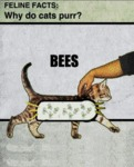 Feline Facts: Why Do Cats Purr?