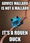 Advice Mallard Is Not A Mallard...
