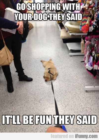 Go Shopping With Your Dog They Said. It'll Be Fun