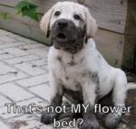That's Not My Flower Bed