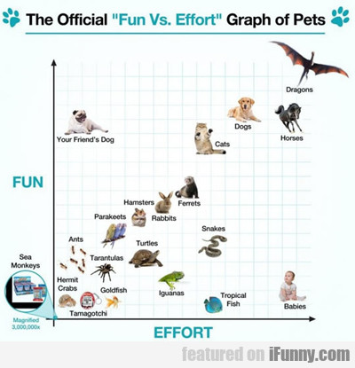 The Official Fun Vs Effort Graph Of Pets...