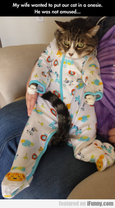 My Wife Wanted To Put Our Cat In A Onesie