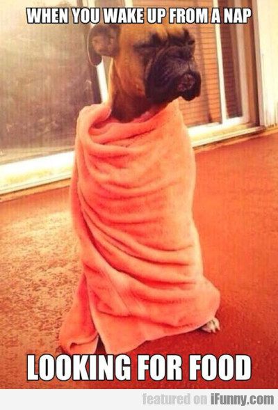 When You Wake Up From A Nap, Looking For Food