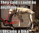 They Said I Could Be Anything. I Became A Bike