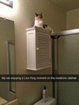 My Cat Enjoying A Lion King Moment On The...