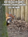 Did You Call My Name?