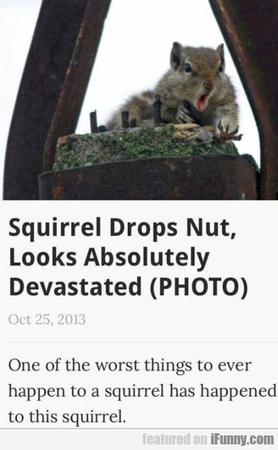 Squirrel Drops Nut, Looks Absolutely Devastated