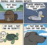 Animals Have Amazing Instinct