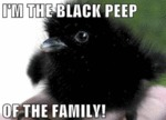I'm The Black Peep