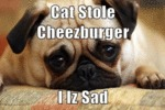 Cat Stole Cheezburger