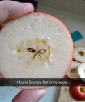 I Found Grumpy Cat In My Apple...