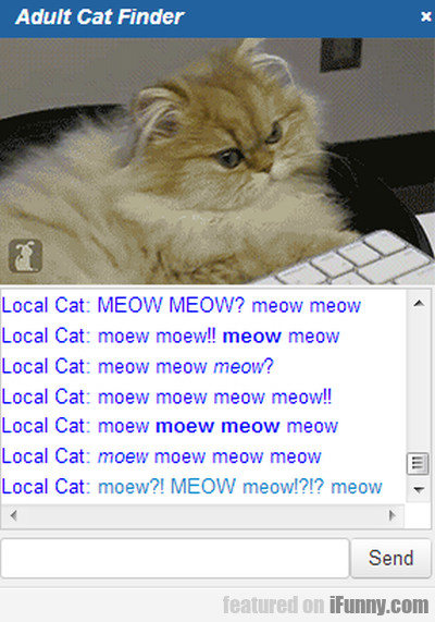Local Cat: Meow Meow