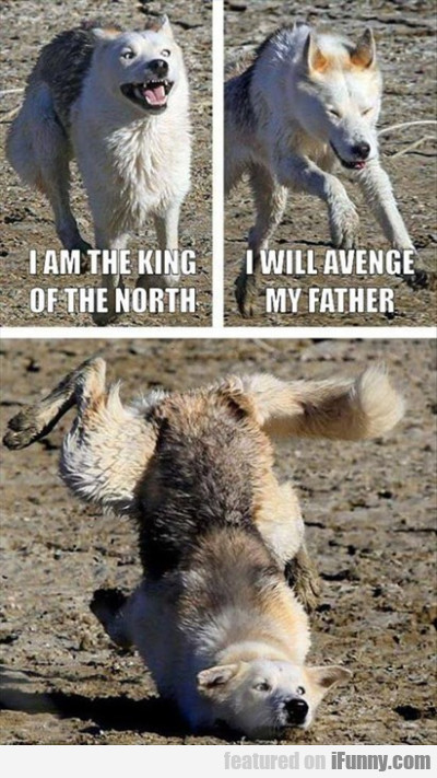 i am the king of the north