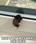 I Dunno Man, What If My Knees Aren't That Great...