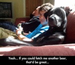 Yeah... If You Could Fetch Me Another Beer That...