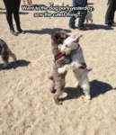Went To The Dog Park Yesterday Saw The Cutest...