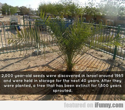 2,000 year old seeds were discovered...
