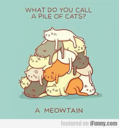 What Do You Call A Pile Of Cats? A Meowtain