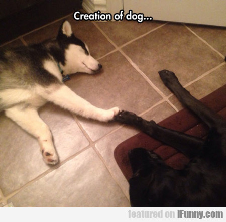 Creation Of Dog