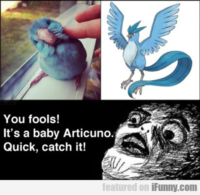 You Fools! It's A Baby Articuno...