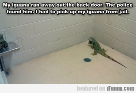 My Iguana Run Away Out The Back Door