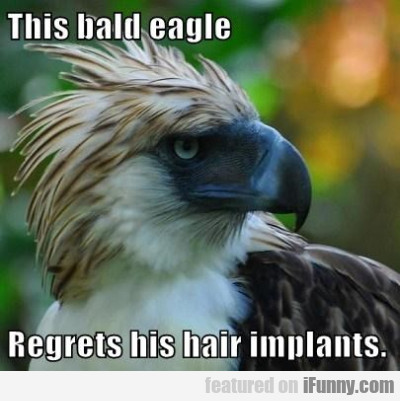 This Bald Eagle Regreats His Hair Implants