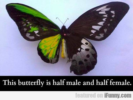 This Butterfly Is Half Male And Half Female...