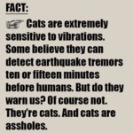 Cats Are Extremely Sensitive To Vibrations...