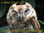 A Bad Case Of Irritable Owl Syndrome