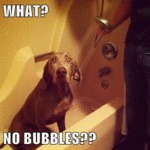 What? No Bubbles?