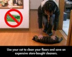Use Your Cat To Clean Your Floors And Save On...