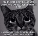 Dear Single Girls Please Stop Saying You Could..