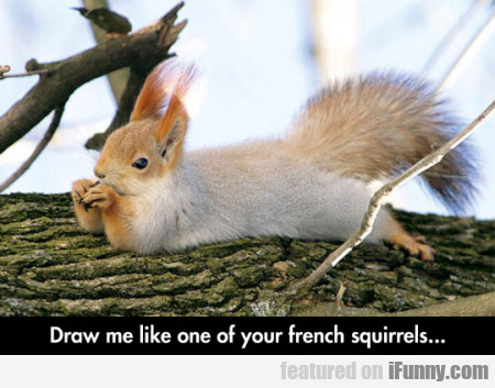 Draw me like one of your French squirrels