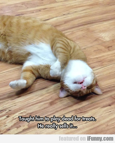 Taught Him To Play Dead For Treats. He Really..